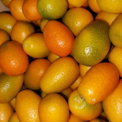 Kumquat-mandarini cinesi